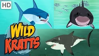 Wild Kratts 🦈🌊 Sharks: Predator and Prey | Shark Week | Kids Videos