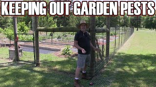 How to keep rabbits and raccoons out of your garden orchard