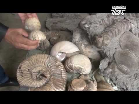 В Дагестане обнаружили останки  ихтиозавра