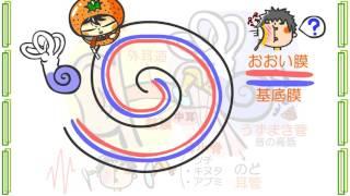 生物4章4話「耳のしくみ」byWEB玉塾