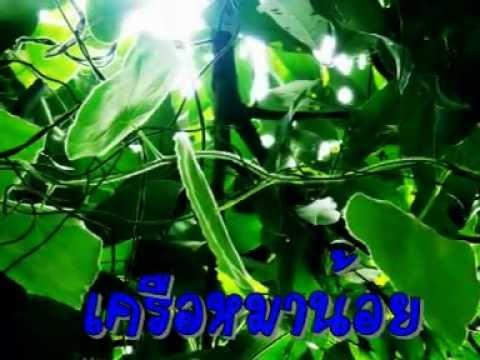 พืชสมุนไพรในท้องถิ่น