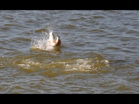 Fishing for Redfish in West Galveston Bay Marsh
