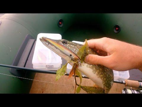 щука на лягушку осенью видео