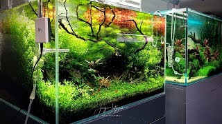 90 Days Update on the 60cm Aquascape at Zoo Flottmann - German Aquascaping and Japanese Koi Shop