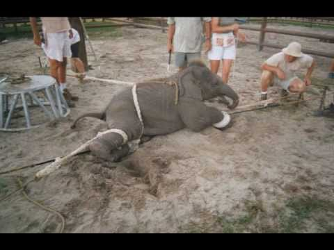 Circus Animal Abuse- Mr. Shelley Literature