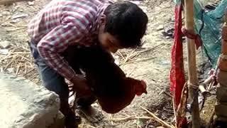 Indian cock sex in hand hen