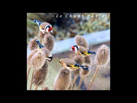 Royale + Tiwawati Le Chant Parfait Pour Vos Jeunes #2 Sans Repetition Sans Stop Mixage Moi Mén 2015