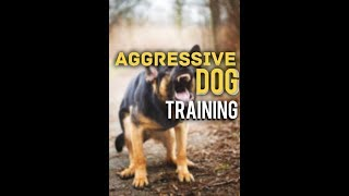 Stop Aggression with Leash Pressure - Dog Training with America's Canine Educator