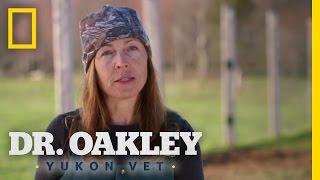 Yukon-Style Round Up | Dr. Oakley, Yukon Vet
