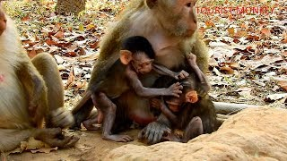Cute baby monkey relax and play happily with 2 puppies, Two adorable newborn monkey fighting