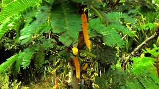 #5576, Arbusto con flores amarillas [Efecto], Plantas, árboles y arbustos