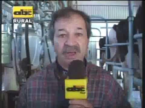 Flameado de ubre en vacas lecheras