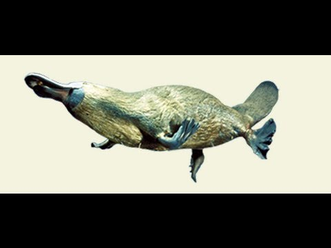 утконос рыбалка