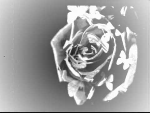 Tristania - Gardenia
