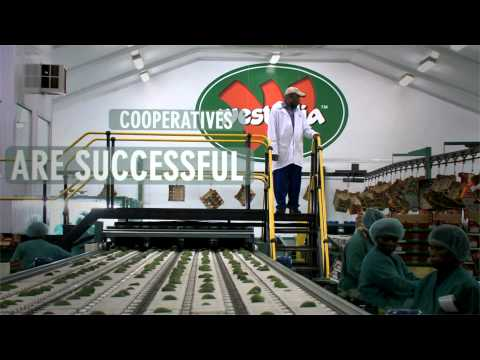 International Year of Cooperatives Video Clip 2012