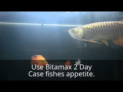 Review Bitamax เคสปลามังกรเจริญอาหารขึ้น (Arowana)
