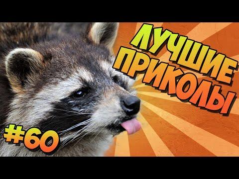 ЛУЧШИЕ ПРИКОЛЫ #60 ВЕСЁЛЫЕ ЕНОТЫ
