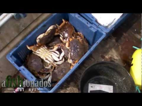 How-To Catch Dungeness Crab Using Traps