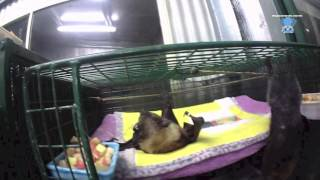 Senior bats in their night time cage: Walter and Teddy