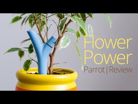 Обзор электронного садовода Parrot Flower Power | UiP