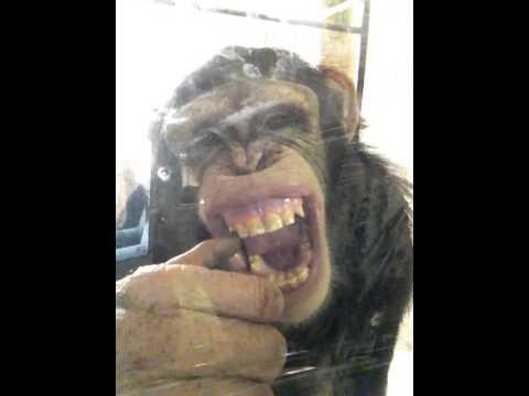Monkey Making Noise Monkey Making Funny Faces