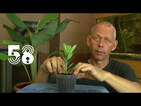 Die Sämlinge und wie geht es weiter mit den Exoten und anderen Pflanzen Teil 58