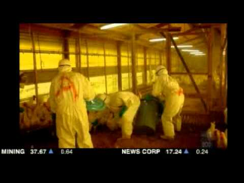 Bird flu outbreak grips southern Japan