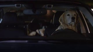 2016 Subaru Superbowl commercial -  Dog tested