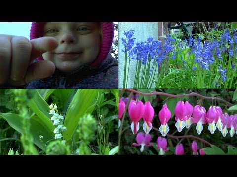 Der Garten im Mai. Natur mit anderen Augen sehen.