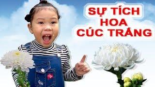 Truyện Dân Gian -- Sự Tích Hoa Cúc Trắng ❤ Susi kids TV ❤