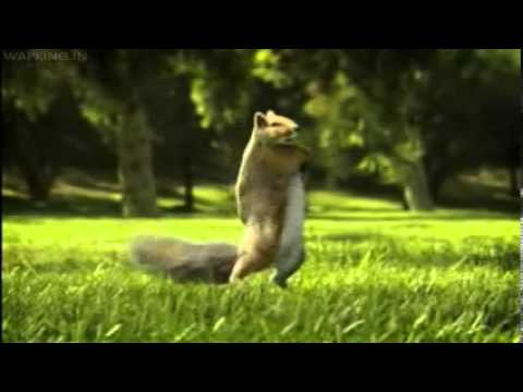 Nestle Kit Kat India Squirrel Break Banta Haiwapking In video