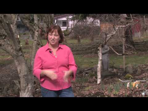 Canadian serviceberry for Canadian gardening tips