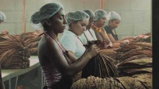 Genesis Documentary - Production at Camacho Cigars