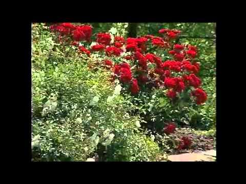 AUMANN Gruppe: Garten- Und Landschaftsbau