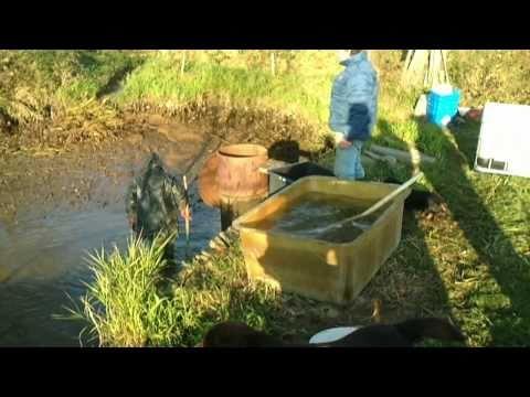 velký výlov malého rybníka