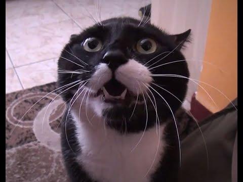 Говорящие Коты Подборка 2016
