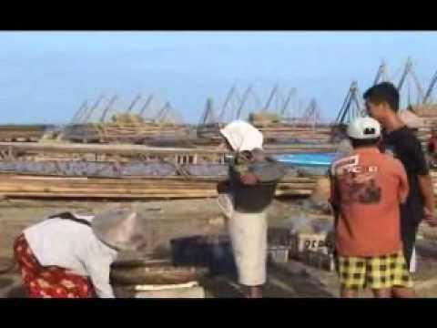 Pelelangan Ikan di Kec. Sumur Kab. Pandeglang Banten