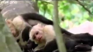 Punjabi Dubbing talking Animals.. very funny must watch
