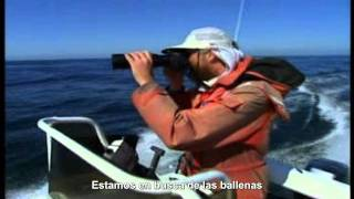 Watch Aha Were Looking For The Whales video