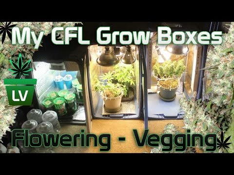My CFL Micro Grow Boxes for Flowering and Vegging