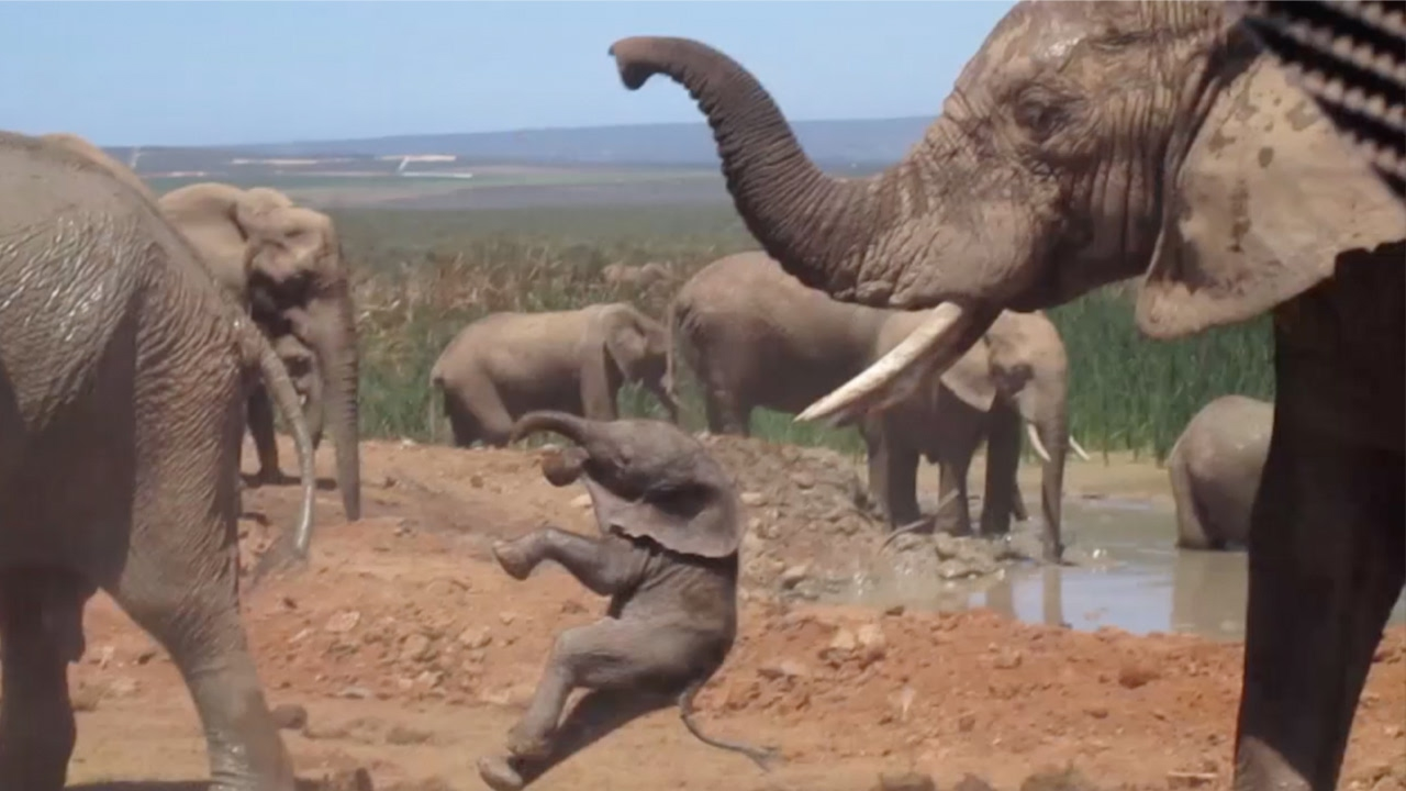 Bull Elephant Takes His Frustration Out On A Baby