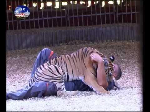 Giordano Caveagna - Addestramento di grandi felini in dolcezza