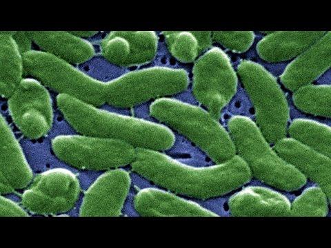 Rare Deadly Bacteria Emerges on Florida Beaches