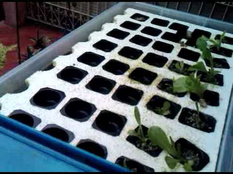 Aquaponics grow bed philippines info plans diy for Hydroponic raft system design