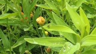 #5394, Planta verde con flor amarilla y rocio [Raw], Flora