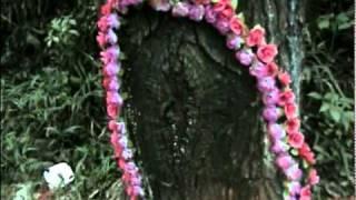 Vídeo 36 de Árbol