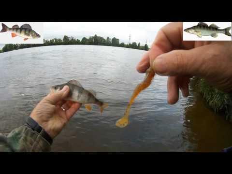 рыбалка на фидер в жуковском