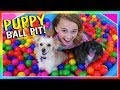 Download IT'S A PUPPY BALL PIT SURPRISE! | We Are The Davises in Mp3, Mp4 and 3GP