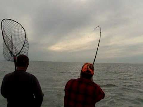 Lake Erie fishing Record possibly caught!