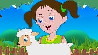 Mary đã có một con cừu nhỏ | vần điệu cho trẻ em | bài hát lamb ở việt nam | Mary Had A Little Lamb